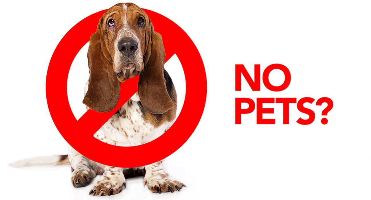 No Pets Allowed What You Need To Know About Pets Rentals Kijiji