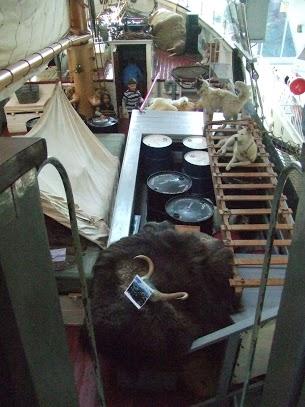 ship animals and equipment